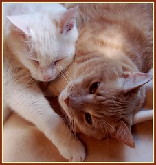 We're Bold and Beautiful (Gail S) Tags: cats pinky picnik lovebugs thepuss beautifulboys excellentcatshots