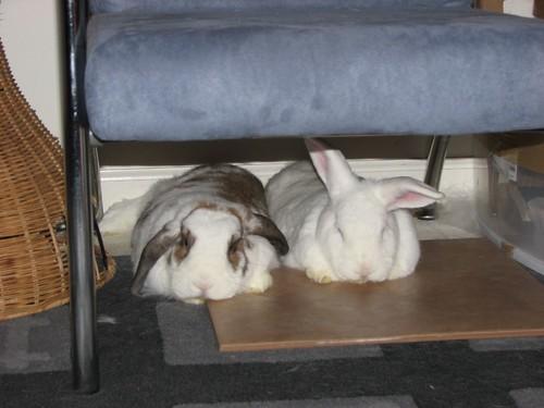 pancake bunnies