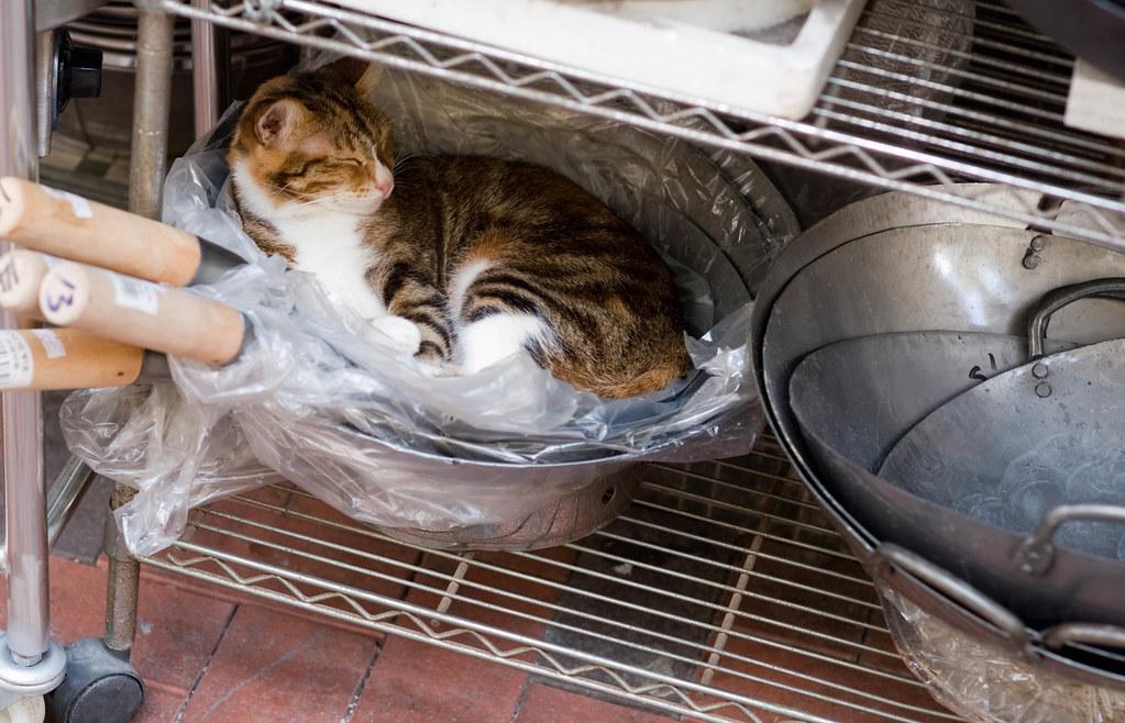 Wok Cat Nap