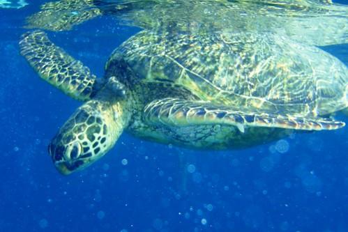 Turtle! Looooove turtles