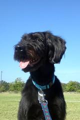 Pup at park