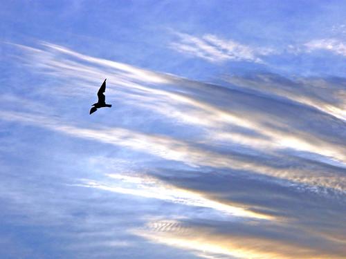 September 11 -- Still Flying