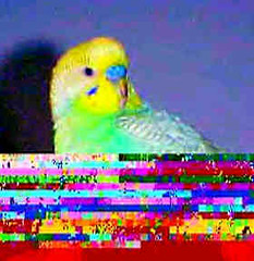 Tropic, a Parakeet I Used to Have, with Camera or Computer Generated Glitches (Pixel Packing Mama) Tags: parakeet 15favourites 510favorites pixelpackingmama dorothydelinaporter worldsfavorite favoritedpixset lossypool mavicafanclubpool sonymavicafd71pool glitchartpool uploadedsecondhalfof2008set cbatdef multicoloredmiscellaneousset update4sure update4sureset pixelpackingmama~prayforkyronhorman oversixmillionaggregateviews over430000photostreamviews