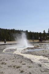 Sawmill Geyser (Henk Schrijvers) Tags: geyser yellowstonepark uppergeyserbasin sawmillgeyser