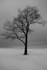 Chicago Winter (chicago_bear) Tags: winter bw lake snow chicago cold tree ice beach blackwhite michigan bare icy 2008 desolate barren bitter lakefront