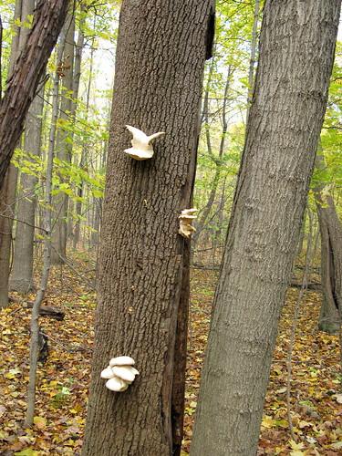 Bird Mushroom Flickrsize