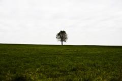 Hiking in Upper Bavaria (raumoberbayern) Tags: blue sky mountains tree green grass alpes landscape meadow wiese gras poles grn alpen blau landschaft baum robbbilder badaibling