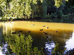 Jezero (my moon blue) Tags: light lake nature water croatia zagreb finepix maksimir jadranko platinumphoto s5700 theperfectphotographer mymoonblue vodagradvoda