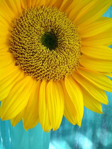 Autumn Sunflower in Thrift Store Vase