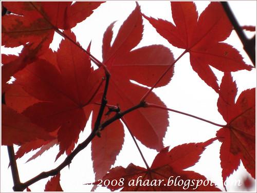 fall 2008 -1