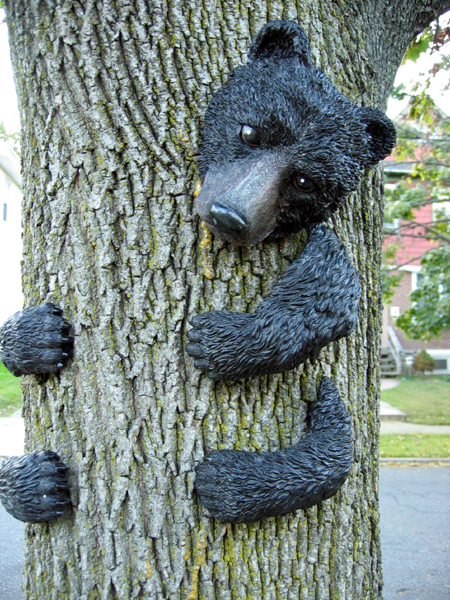 Bear in Tree (Click to enlarge)