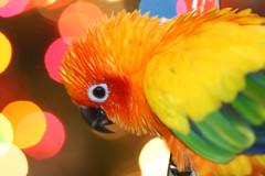 Christmas Birdy-1