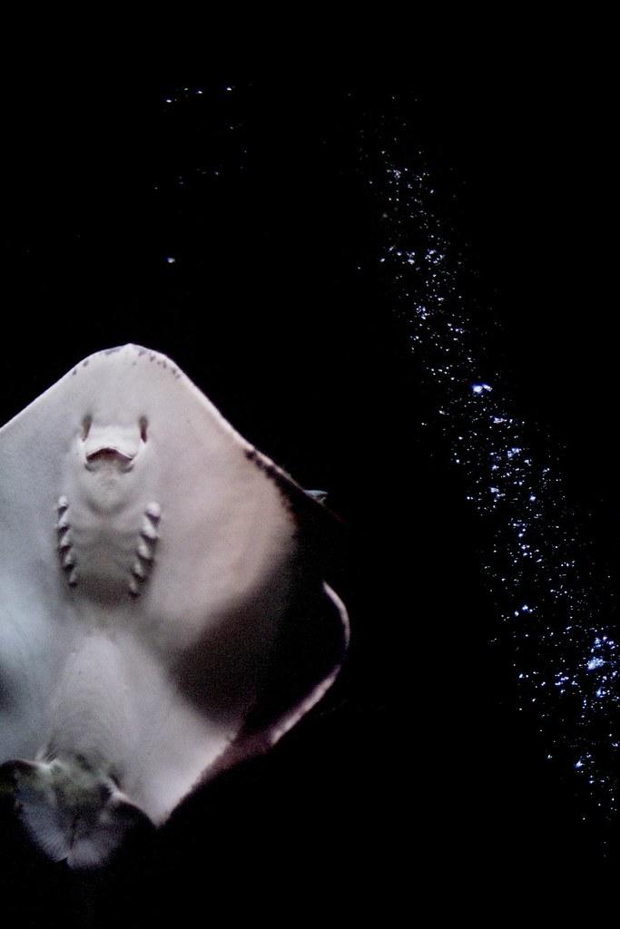 Under da sea