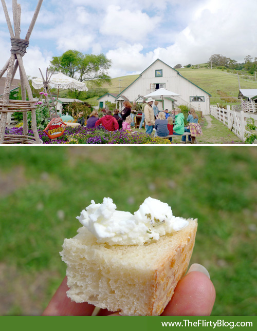 fresh-chevre-tour-harley-farms