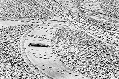 Lone Sunbather Bondi Beach (sachman75) Tags: morning blackandwhite bw man male tourism coast sand patterns sydney tan australia coastal newsouthwales bondibeach tanning easternsuburbs 5dmarkii 5dmark2