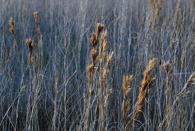 DSC_7447.-Tall-grass
