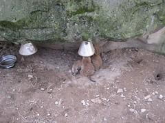 IMG_1962 [1024x768].JPG (yerseypijpelink) Tags: rhenen ouwehands dierentuin yersey
