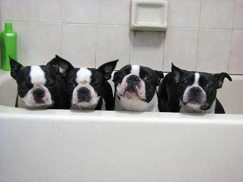 Bathtub sadness