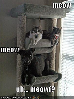 Meow: Species confusion.jpg