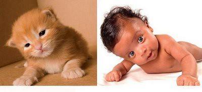 Aksi Kucing dan Baby 01 by maenkhok.
