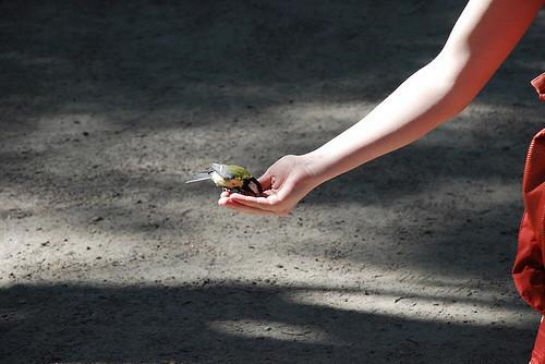 Más vale pájaro en mano, también dicen en la isla de Seurasaari