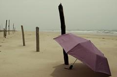 paraguas bronceado (liss_mcbovzla) Tags: venezuela zulia zapara