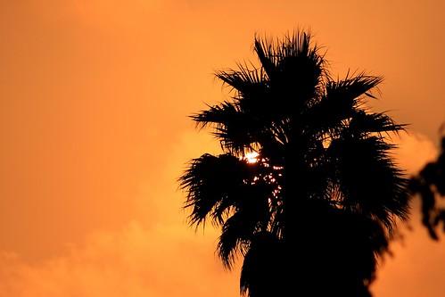 Palm l'orange