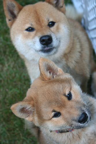 Tama&Trixie