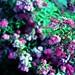 Cross-processed flowers 8