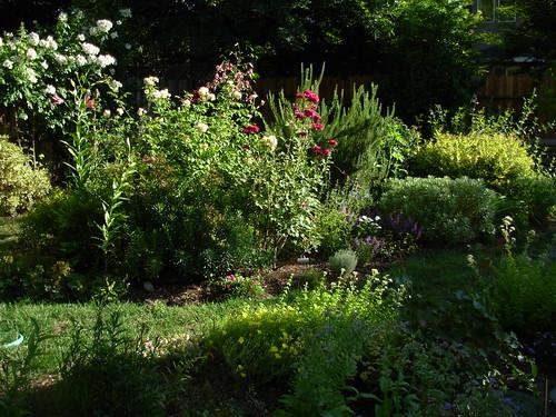 garden shots aug 08 006