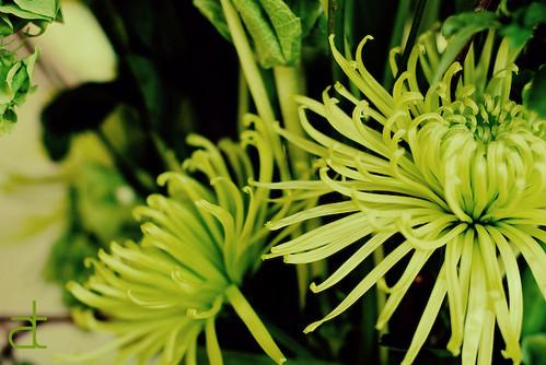 stringed bloom