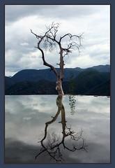el arbol de hierve el agua (zokoamikel) Tags: wood mountain montagne arbol reflet oaxaca mexique paysage mikel arbre incroyable mywinners