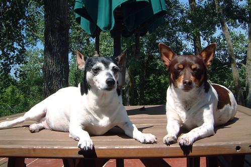 2008-06-20 - Kaylee & O-Ren - 0011 [Gina 4x6]