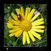 Ladybird - bring me luck - Portami fortuna