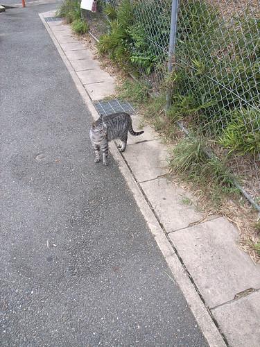 I met a cat