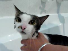 Bathtime For Poor Foo Foo