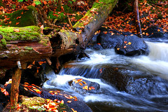 Autumn Brook Series 3 of 8 (Pierre Contant) Tags: wood autumn canada fall tourism creek forest photoshop automne river nikon rocks stream angle quebec pierre wide trails wideangle rivire falls explore brook abitibi d300 cs3 ruisseau naturesfinest temiscaming tmiscamingue contant omot cans2s forestery abitibitmistamingue pierrecontant