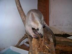 Pua's log