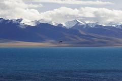 Nam (Namtso Chumo) tso (reurinkjan) Tags: nature tibet namtso 2008 changtang namtsochukmo nyenchentanglha tibetanlandscape tengrinor janreurink damshungcounty vulturebearded damgzung