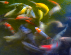 Koi at Hakone Gardens (1.5 second exposure) (Abe K) Tags: california fish gardens japanese pond nikon artistic expression saratoga d2x koi carp 1001nights hakone flickrsbest mywinners abigfave platinumphoto colorphotoaward platinumheartawards theperfectphotographer simplysuperb nikonflickraward theuniquephotographer