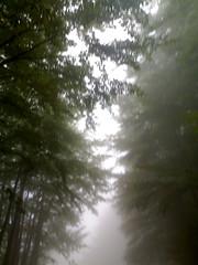 ... (lamelamara) Tags: alberi nebbia boschi