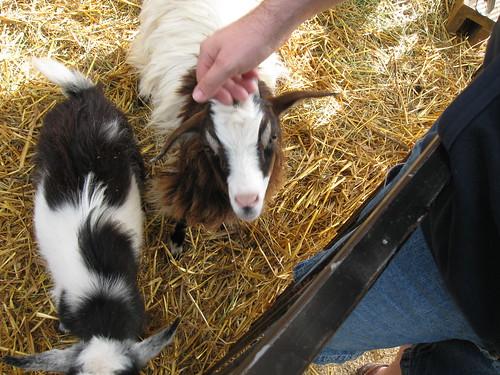 My husband petting a goat