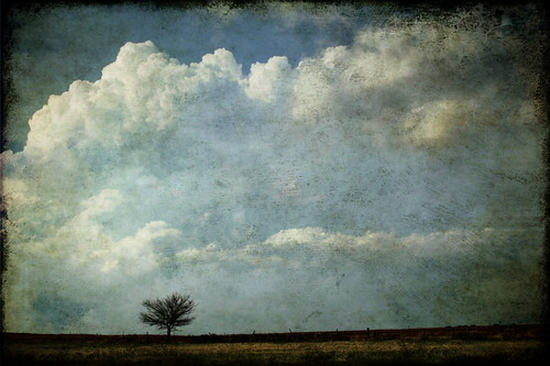 Lone tree, 1 image series b
