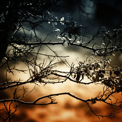 Twilight (Villi.Ingi) Tags: light sunset tree nature fairytale forest canon square scotland leaf twilight warm branches magic shade mystical mystic 500x500 pipc dapa 40d world100f alemdagqualityonlyclub