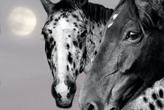 Deep in the heart of the night (maggiedeephotographer) Tags: horses horse moon moonlight chevaux blackwhitephotos