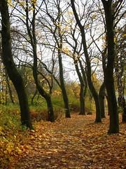 Autumnal trail (RainerSchuetz) Tags: park autumn fall germany hessen indiansummer hessian herbststimmung brunnenpark autumnimpression fallimpression hofgeismar kantorrhodepark
