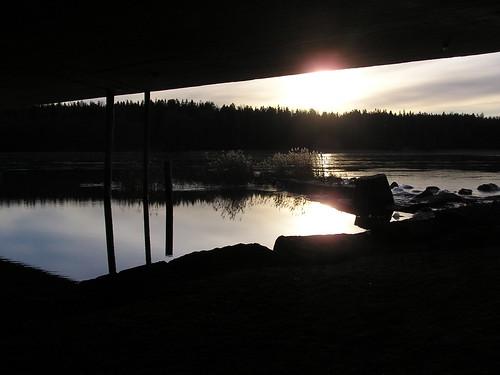 Kaislikko aurinkoa vasten sillan alta