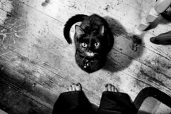 (On Explore) I thought you were going to give me a treat? (Jai Yung) Tags: wood black cat kitty shy hungry soe torte 100commentgroup catnipaddicts jaiyung