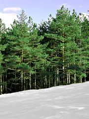 (kai.zen) Tags: trees snow serbia srbija zlatibor