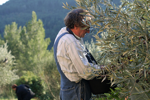 mort picking olives